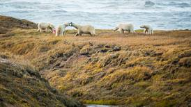 Arctic Ocean vs. ANWR: Was there ever a choice for oil drillers?