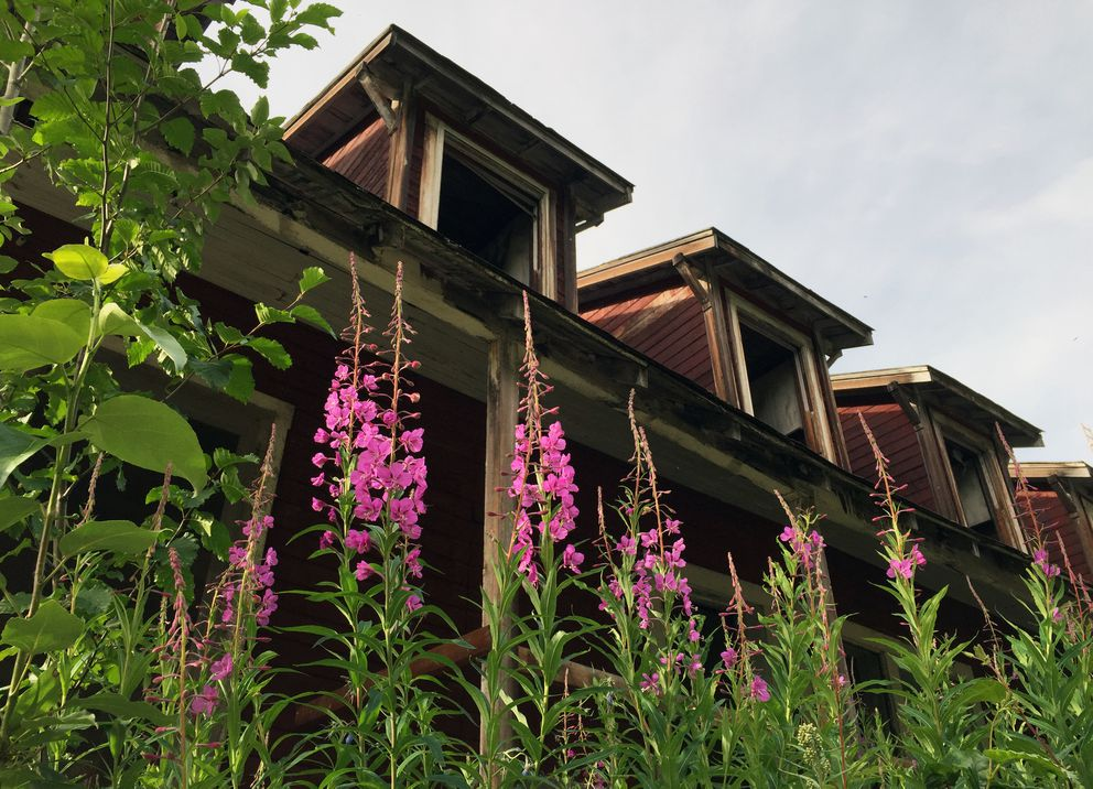 Fireweed blossoms adjacent to the vacant National Creek Bunkhouse at Kennecott Mines National Historic Landmark located near McCarthy in Wrangell-St. Elias National Park and Preserve. (Erik Hill / ADN archive 2015)