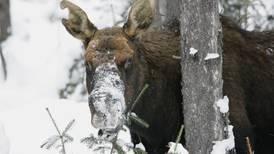 Wildlife endangered by Yukon warm weather