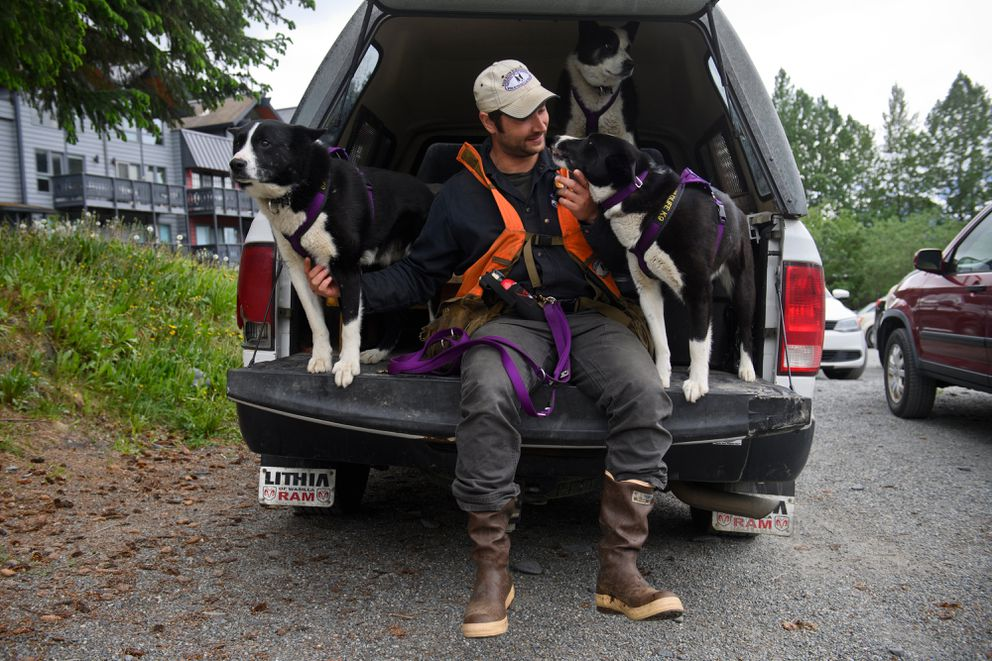 Nils Pedersen with his dogs, from left, Rio, Soledad and Mardy on June 16, 2021. Pedersen, of Fairbanks, uses Karelian bear dogs to detect bears and deter their presence in residential neighborhoods. He's working this month in Girdwood. Pedersen is the director of the Wind River Bear Institute. (Marc Lester / ADN)