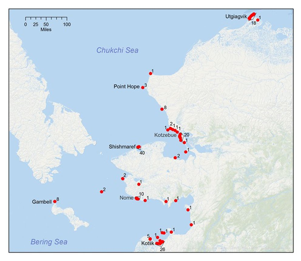 A map of the 2019 ice seal strandings in the Bering and Chukchi seas, February 12 through September 4, 2019. (Map provided by the NOAA)