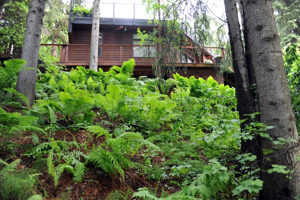Marnie and Jon Isaacs' mostly-underground home is built into a steep hillside in west Anchorage. The west-facing part of the house overlooks Fish Creek. (Anne Raup / ADN)