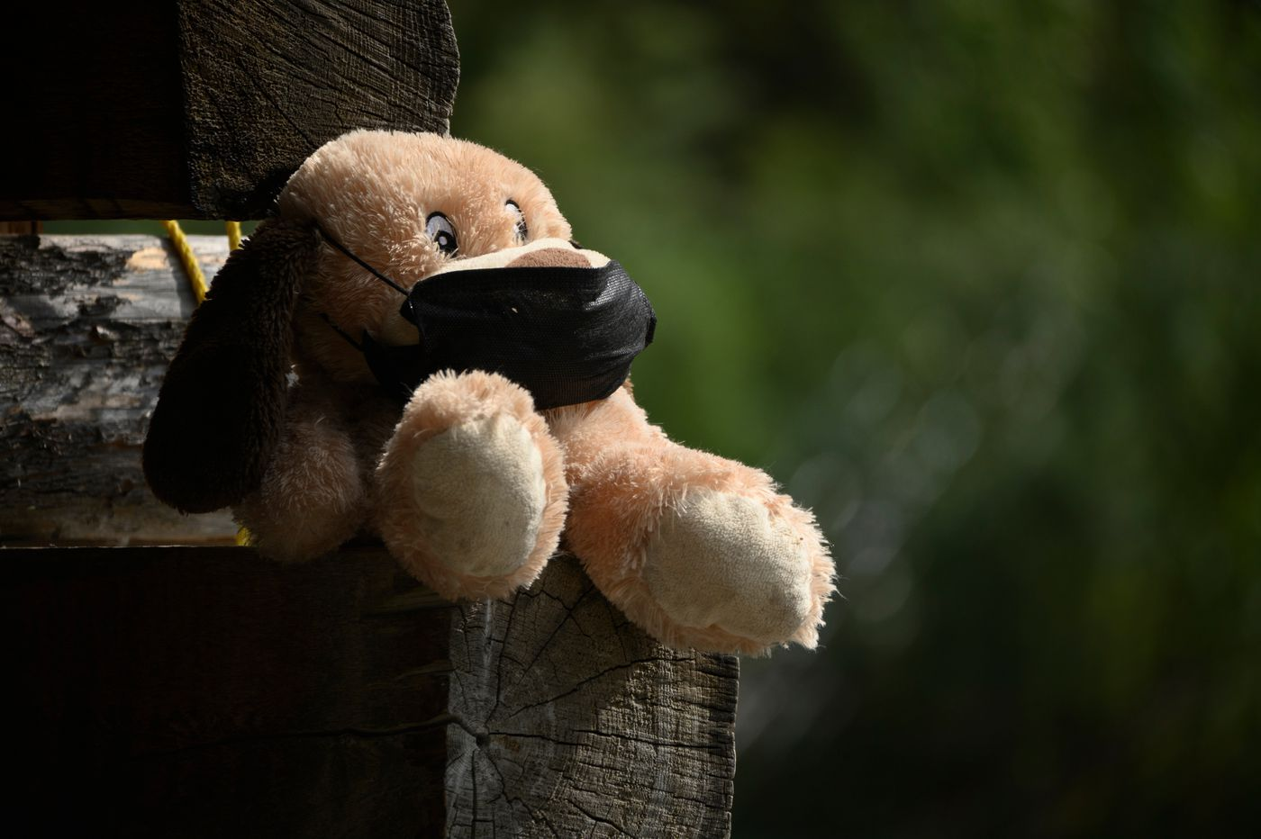 A stuffed animal wears a mask at the office of the Russian River Ferry. (Marc Lester / ADN)