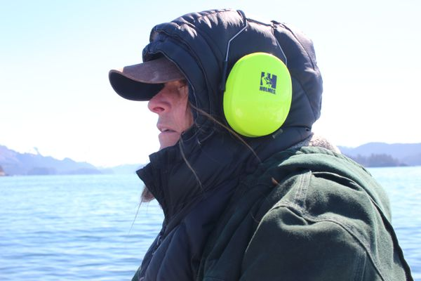 On May 15, Nancy Hillstrand made her way across Kachemak Bay, to the fish-processing plant she runs on Homer Spit, carrying a heavy purple tote of scientific papers and government reports. (Ground Truth Trekking)