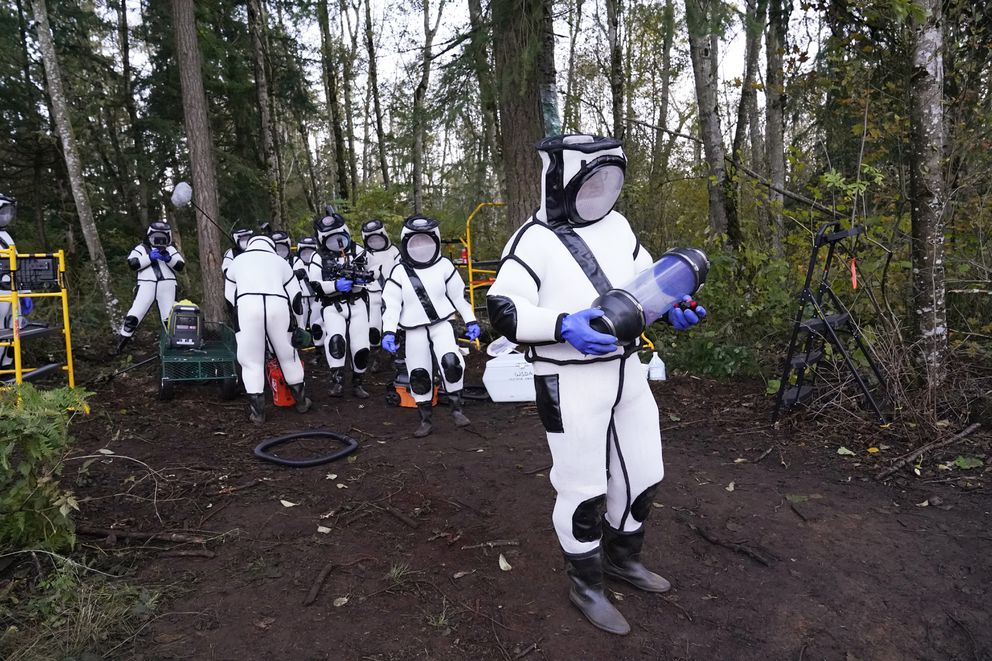 Sven Spichiger, Washington State Department of Agriculture managing entomologist, walks with a canister of Asian giant hornets vacuumed from a nest in a tree behind him Saturday, Oct. 24, 2020, in Blaine, Wash. (AP Photo/Elaine Thompson)