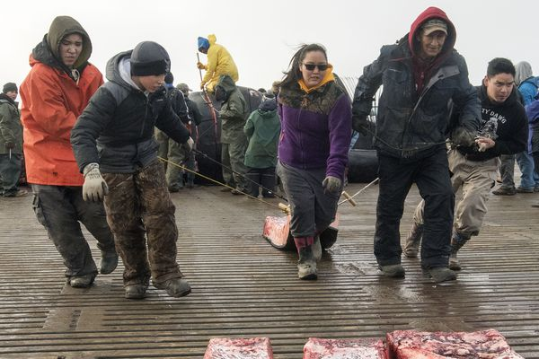 People help moving a butchered whale in Utqiagvik (previously Barrow) Thursday, Oct. 5, 2017. (John Callahan)