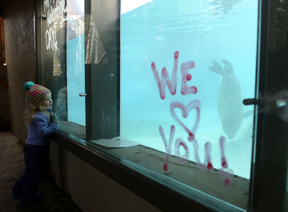 """Sophia Fortney watches the harbor seals as kids and adults enjoy """"Valentines for the Animals"""" at the Alaska Zoo in Anchorage on Saturday, Feb. 13, 2016. Kids could make Valentine's Day cards and deliver them to the animals, explore hands-on exhibits and listen to talks about some of the zoo animals."""