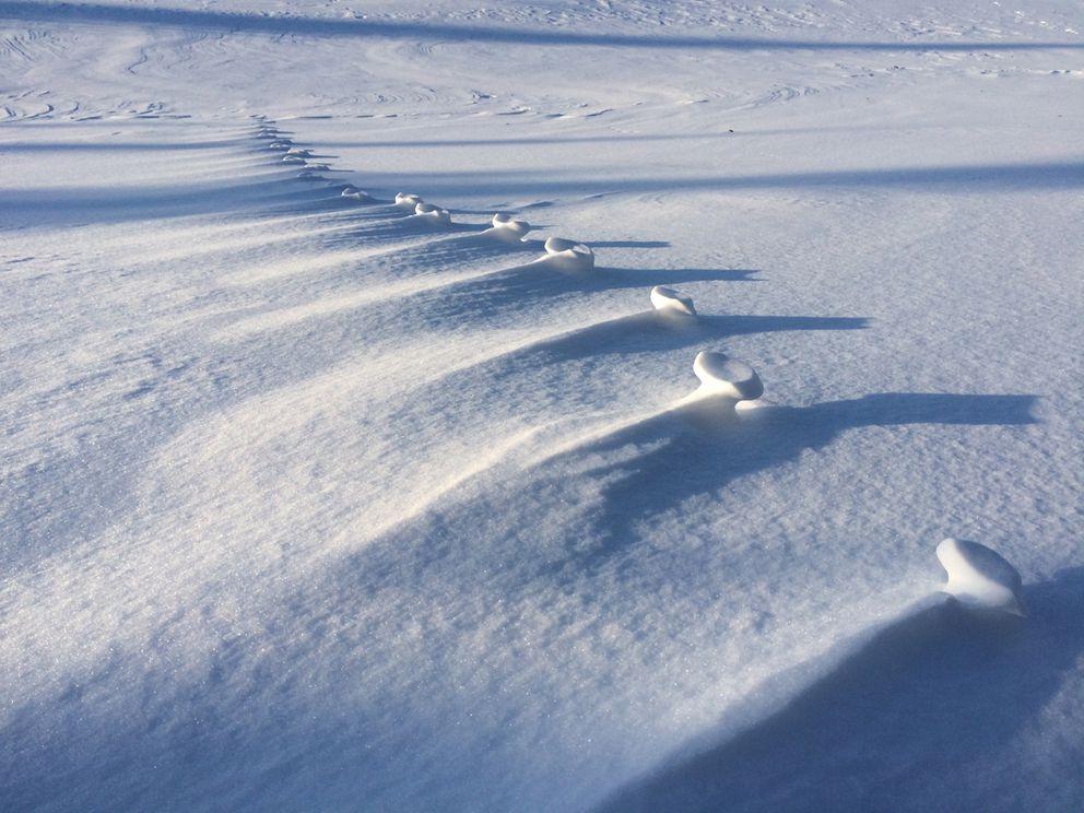 Windblown lynx tracks cross an exposed area. (Photo by Seth Kantner)