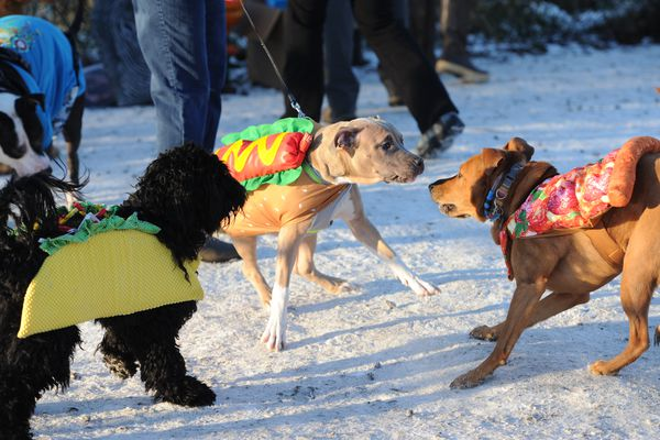 A taco, a hot dog, and a slice of pizza play together during the Halloween Dog Party at the Valley of the Moon dog park on Wednesday, Oct. 31, 2018. (Bill Roth / ADN)