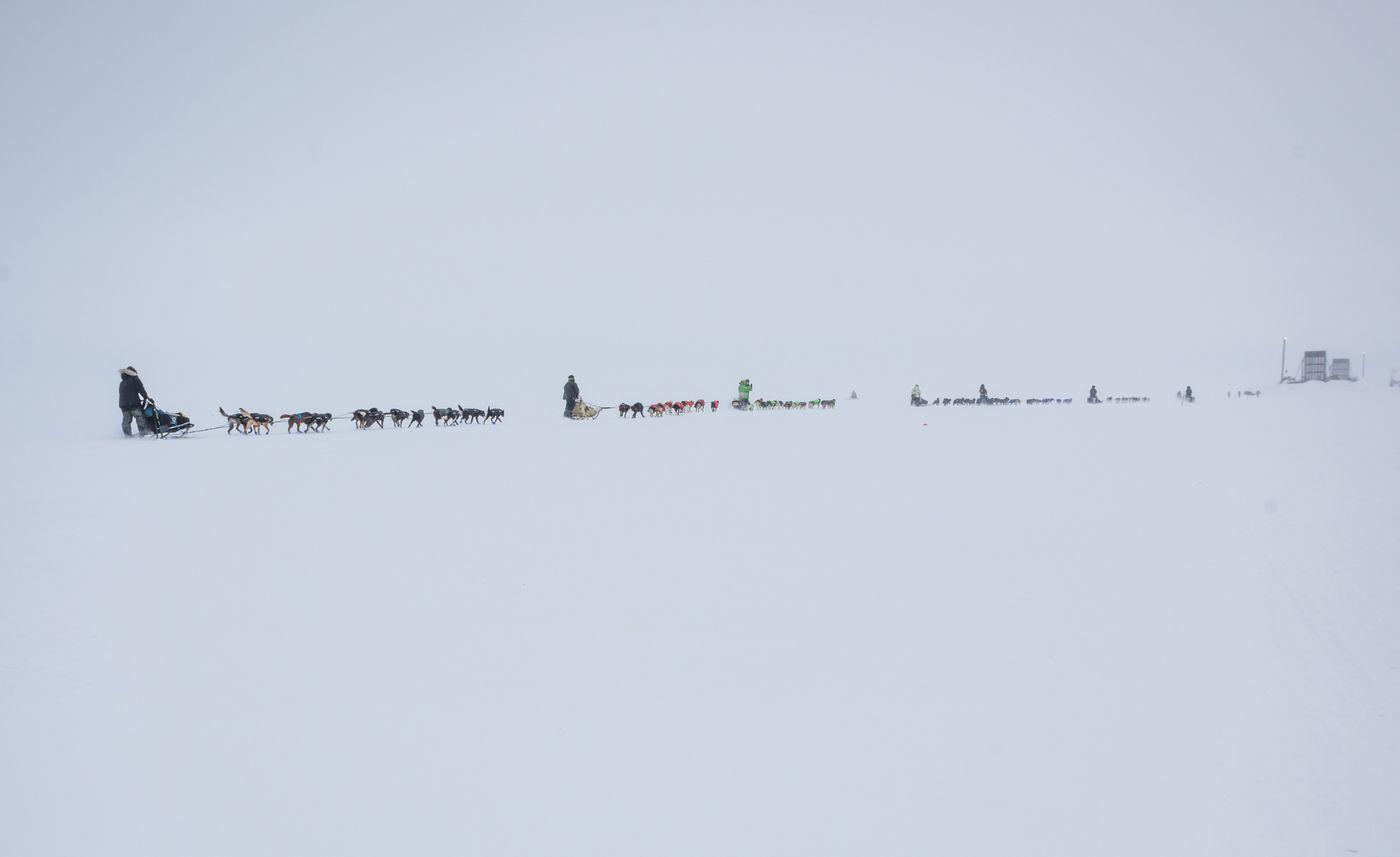 From left, mushers Philip Hanke, Reese Madden, Ryan Redington, Hugh Neff and others begin the Kobuk 440 Sled Dog Race in Kotzebue on April 2, 2021. (Whitney McLaren photo)