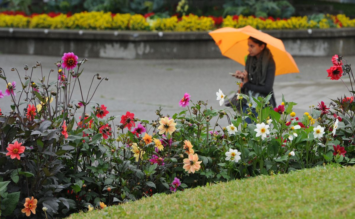 A pedestrian walks through Town Square Park in Anchorage with an umbrella on Sunday, July 14, 2019. The National Weather Service forecast office in Anchorage received more rain that day than in the entire month of June. (Bill Roth / ADN)