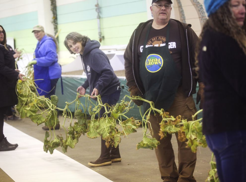 Harvest Fest volunteer Sarah Sperry, center, watches as Dave Iles carefully removes his long gourd vine from a box to be measured. (Emily Mesner / ADN)