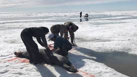 'Crazy' and 'scary': Dramatic ocean warming off Alaska raises concerns for hunters and wildlife