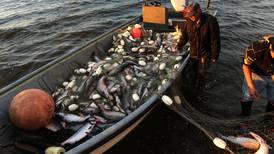 Kotzebue fishery expects a big year