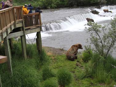 Remarkable book examines the place where bears, fish, tourists converge at Brooks Falls