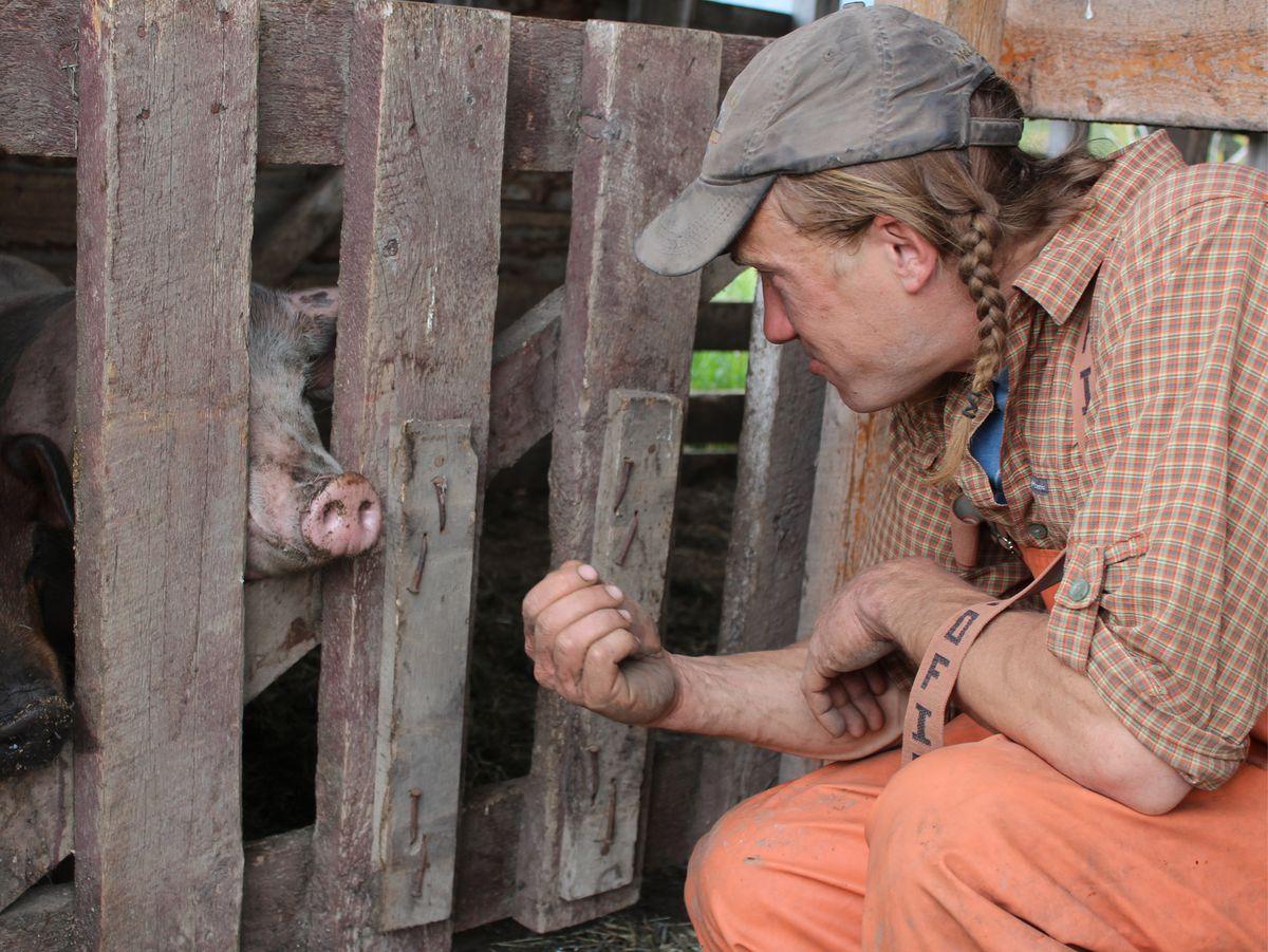 Jason Esler and his pigs in McCarthy. (Catalina Dengel / Alaska Dispatch News)