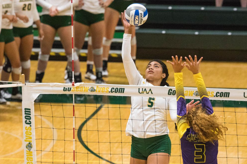 UAA's Taylor Noga spikes the ball during a season-opening game against the Western New Mexico Mustangs Thursday, Aug. 23, 2018 at the Alaska Airlines Center. (Loren Holmes / ADN)