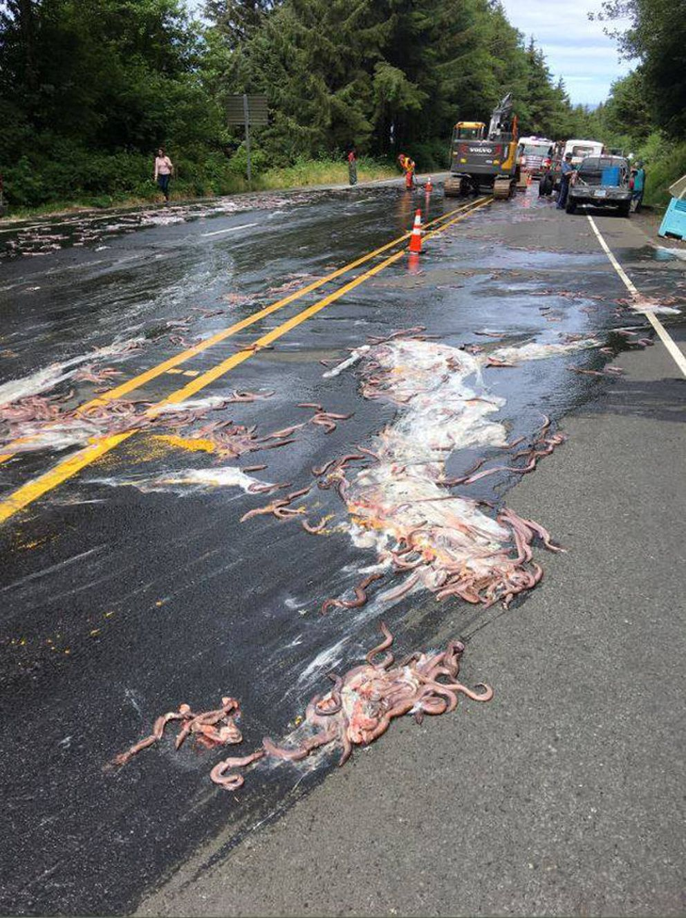 Slime Eels Car Accident