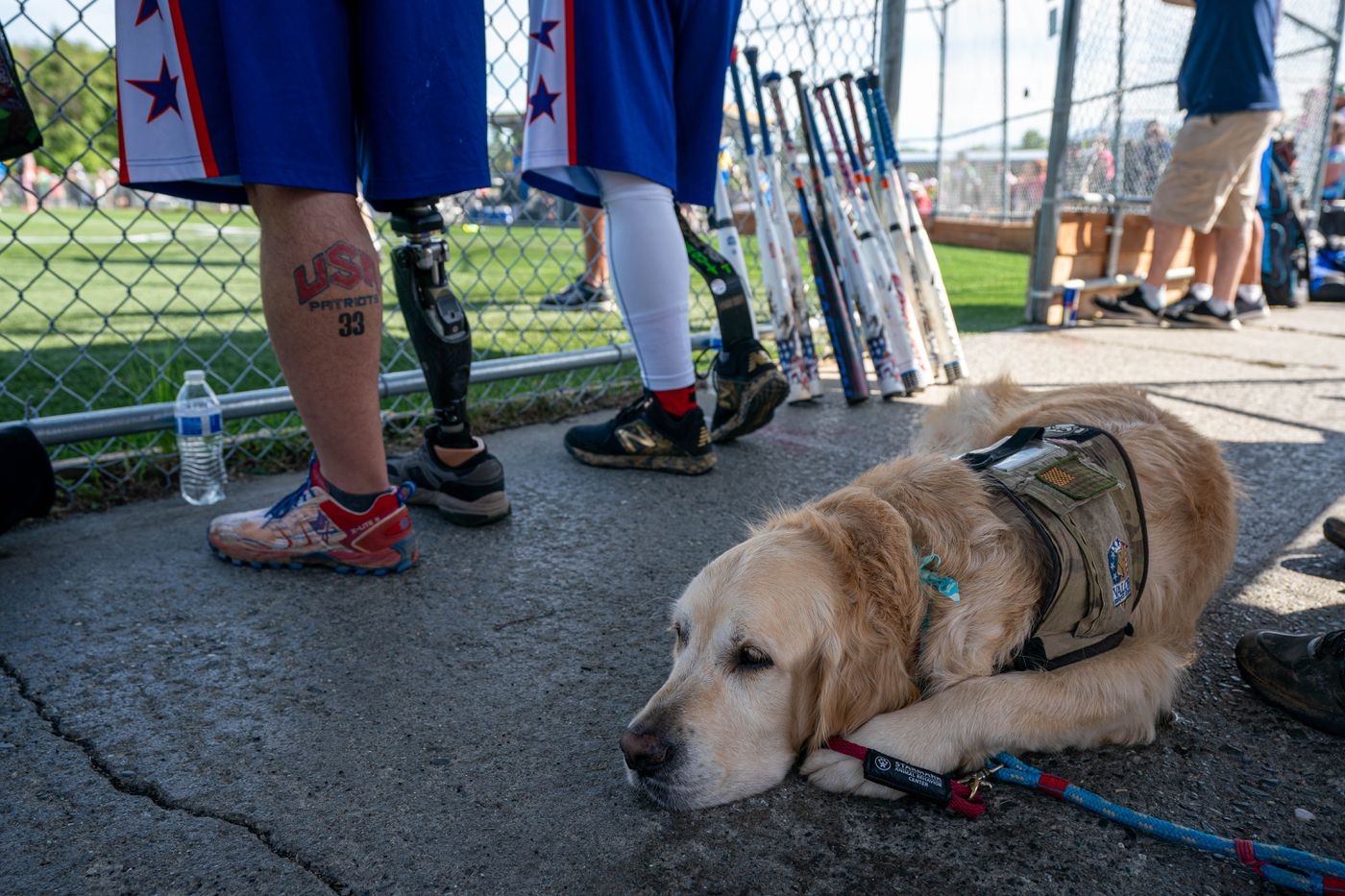 Huey, a service dog for player Reese Hines, relaxes inside the dugout. Hines retired from the Air Force in 2013 and moved to Eagle River for five years before relocating to to Texas. (Loren Holmes / ADN)