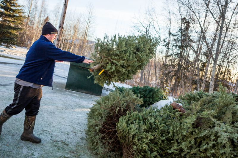 How to recycle your Christmas tree and decorations after the holidays