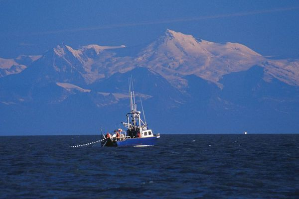 Picture: A drift gillnetter fishes for sockeye salmon on July 23, 2005, in Cook Inlet with 11,070-foot Mount Spurr towering above in the distance.