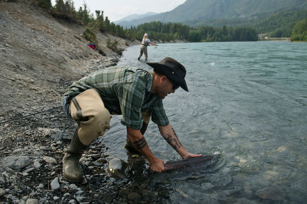 Aaron Henle, of Anchorage, releases a sockeye salmon back into the Kenai River. The fish was inadvertently hooked in its belly on Thursday, July 18, 2019. (Marc Lester / ADN)