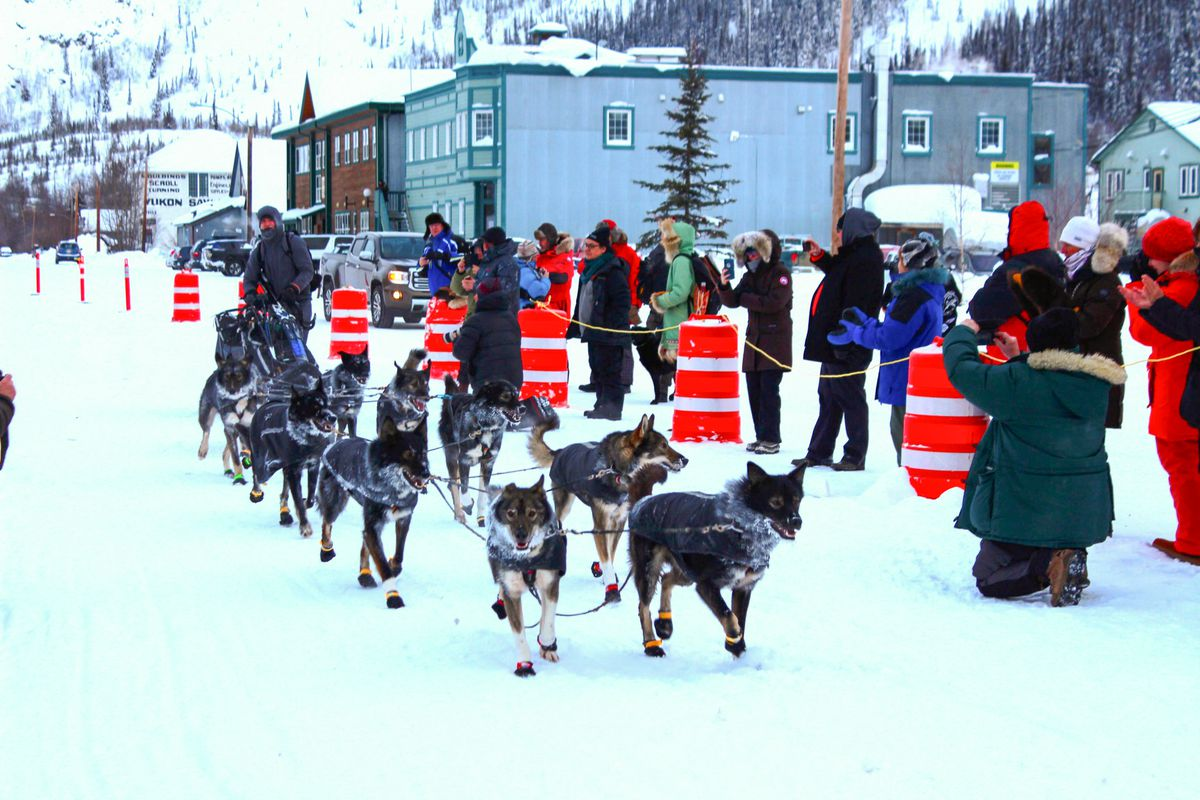 Richie Beattie's team arrives in Dawson City, but with someone other than Beattie on the sled runners. (Lex Treinen for KUAC)