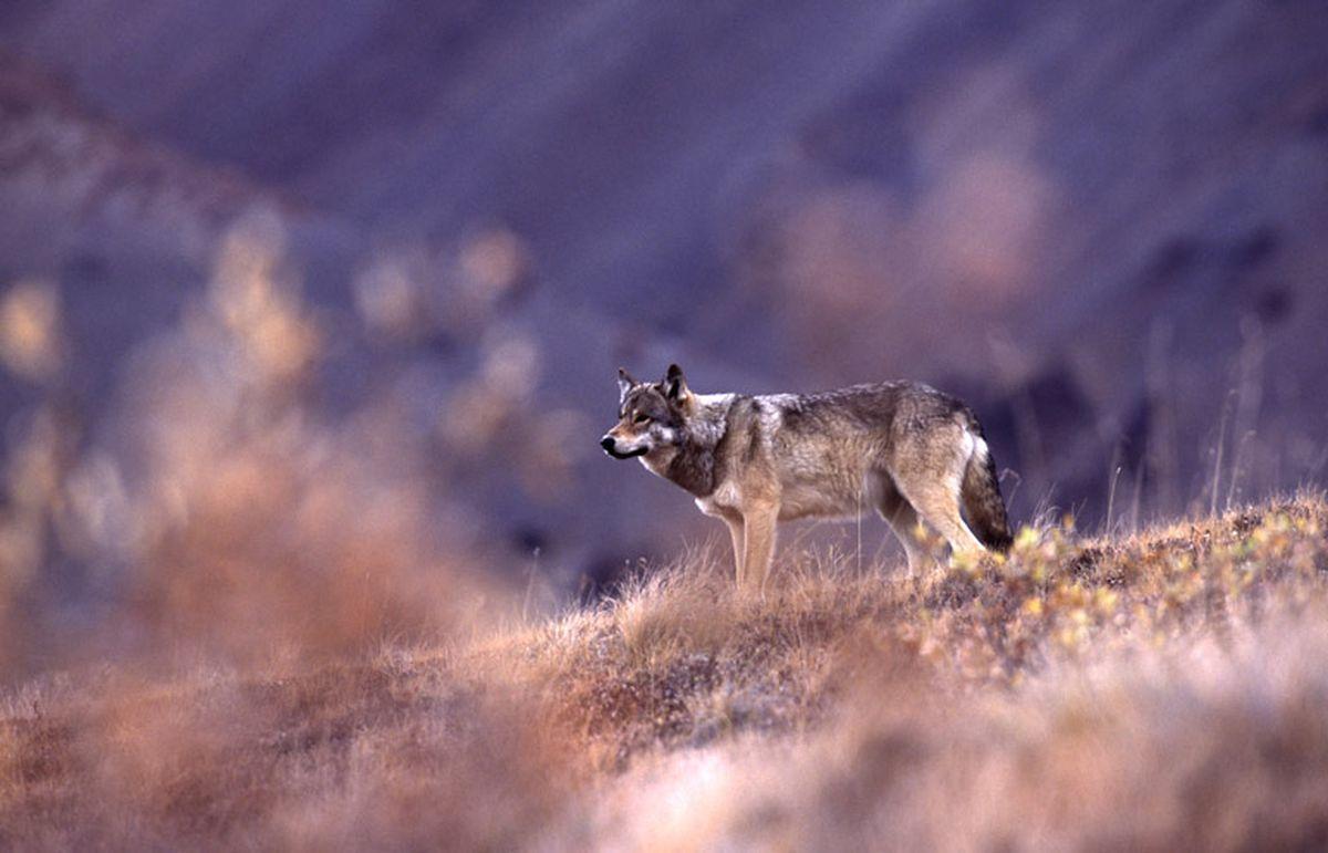 Denali National Park to start reservation system for...