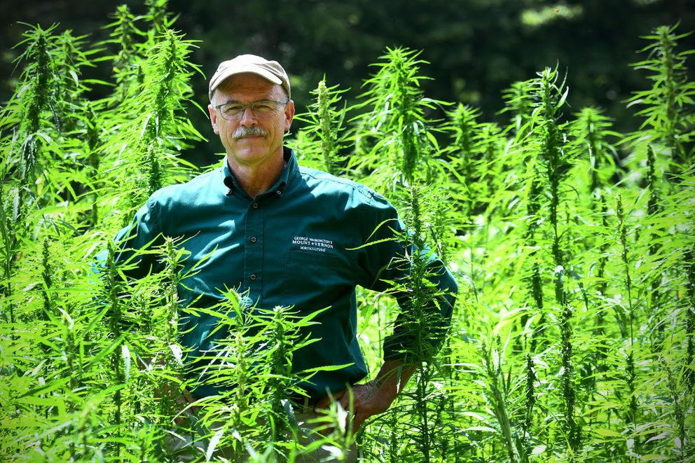 Dean Norton, Mount Vernon's director of horticulture, stands amid the estate's newest crop, hemp. Washington Post photo by Katherine Frey.