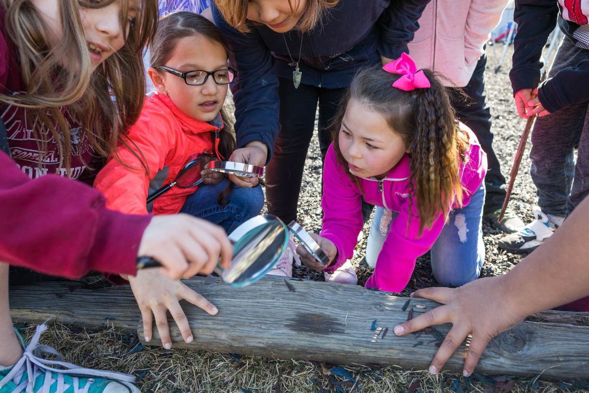 Campbell Elementary third-graders Bella Atkins, left, and Aiyana Simpson use magnifying glasses to look at insects along the edge of their playground on Friday, May 5, 2017. (Loren Holmes / Alaska Dispatch News)