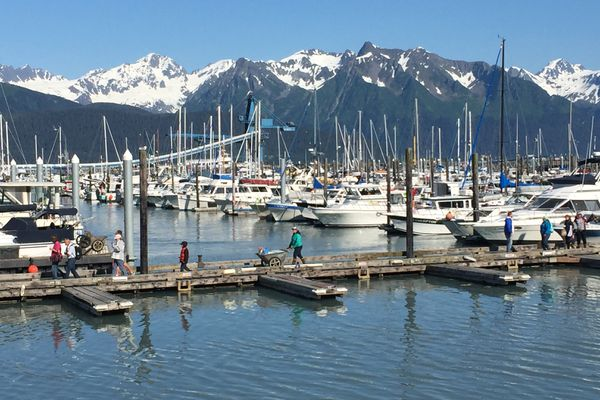 Tour passengers and fishing charters return to the Seward boat harbor on Monday afternoon, June 22, 2015. (Erik Hill / ADN)