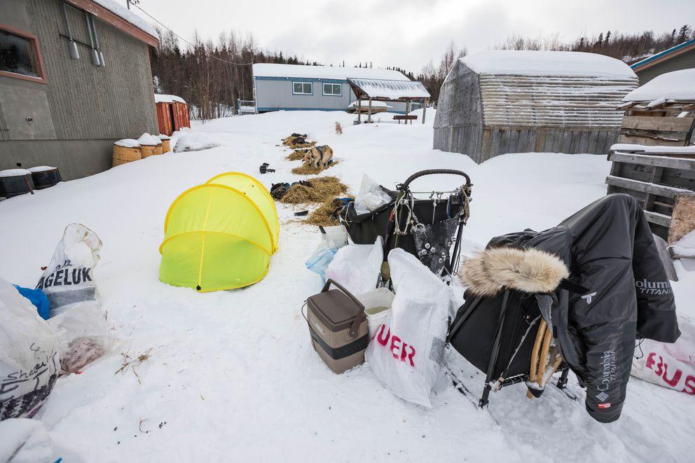 Martin Buser sleeps in a pop-up tent next to his dog team Friday in Shageluk. (Loren Holmes / ADN)