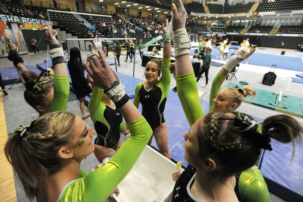 UAA gymnasts prepare to compete on the bars during the Seawolves' 191.175 to 188.900 home victory over Brown at the Alaska Airlines Center on Sunday, Jan. 13, 2019. (Bill Roth/ ADN)