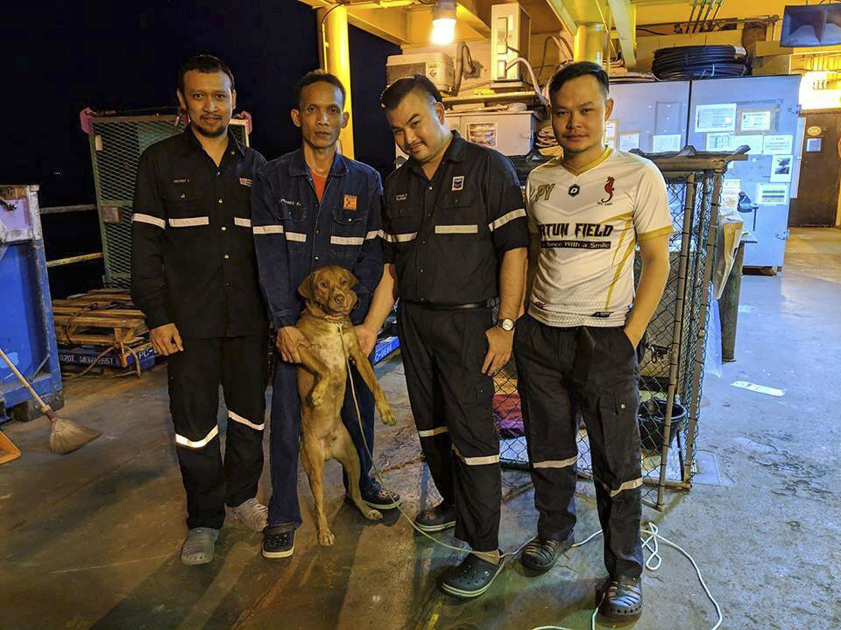 In this Friday, April 12, 2019, photo, oil rig crew pose with a dog after the dog was rescued in the Gulf of Thailand. Survivor