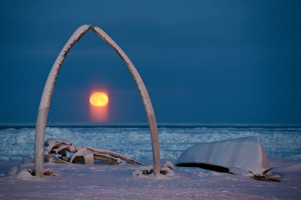 The full moon rises into view from Utqiagvik, the North Slope city that was known as Barrow until its name changed earlier this month, on Tuesday, December 13, 2016. Sometimes known as a moon pillar, the orange light pillar under the moon is the light (reflected from the sun, bounced off the surface of the moon) is again reflected and refracted through ice crystals in the earth's atmosphere, according to National Weather Service's David Snider. Because the ice crystals are flat, they channel the light vertically. (Marc Lester / ADN)