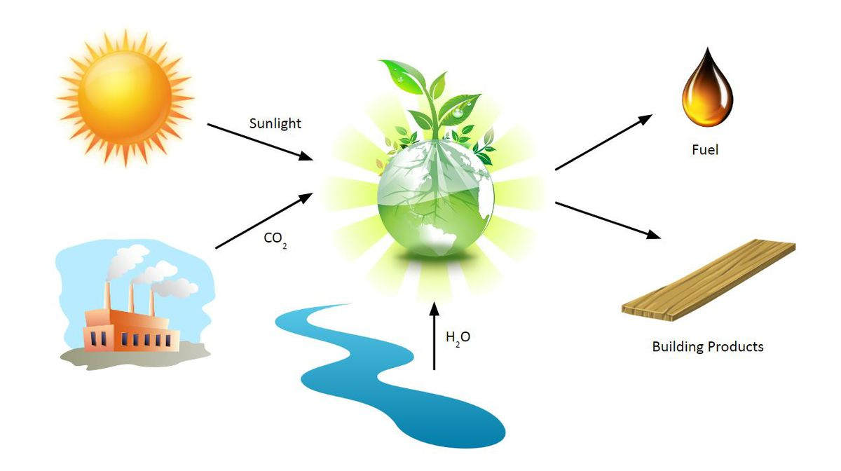 Via photosynthesis, plants convert greenhouse gases into forms humans can more easily use. (Patrick Sullivan illustration)
