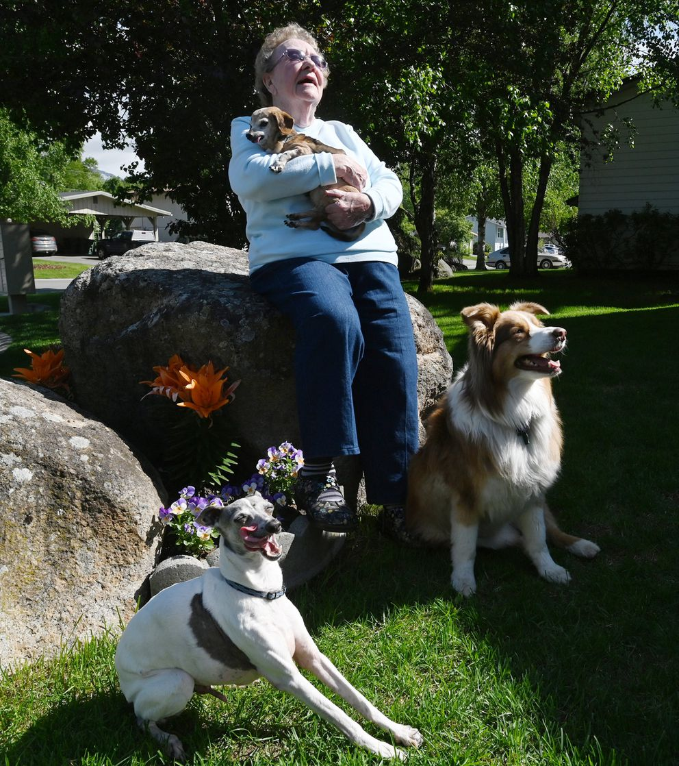 Donna Rodgers survived a moose attack while walking with her dogs Belle, Ranger and Briana at the former Eagleglen Golf Course on JBER on Tuesday. Photographed Thursday. (Bill Roth / ADN)