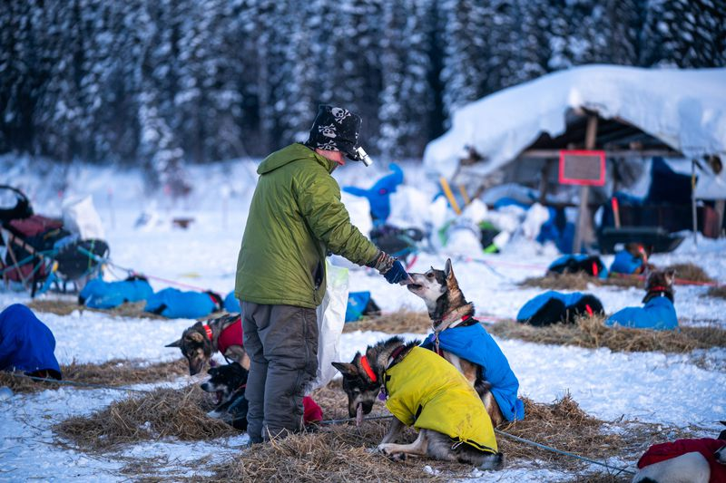 Lev Shvarts feeds his dogs in Nikolai on Tuesday, March 10, 2020 during the Iditarod Trail Sled Dog Race. (Loren Holmes / ADN)