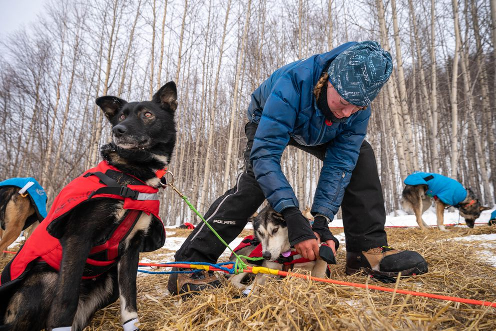 Anna Berington puts her booties on her dog Rizzo before leaving Takotna on Thursday. (Loren Holmes / ADN)