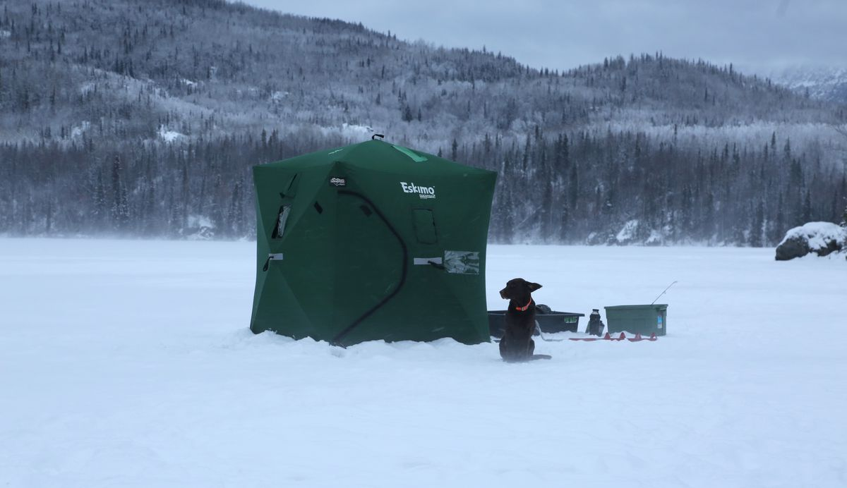 Cheyenne, a chocolate Lab, stands guard outside Christine Cunningham's ice fishing shanty in January 2017. (Photo by Steve Meyer)