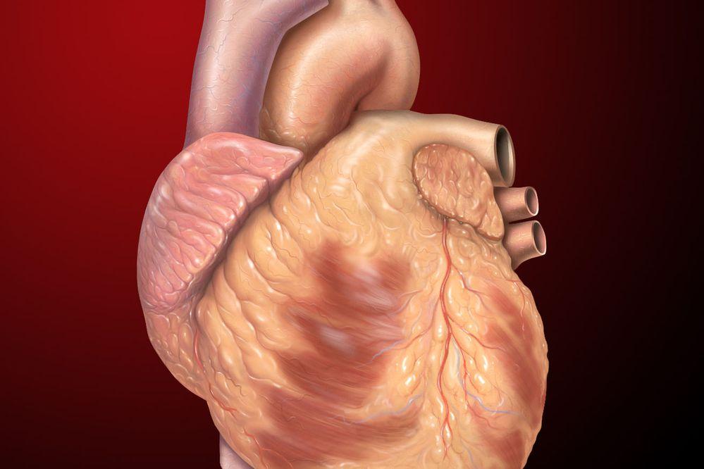 Human heart illustration by Patrick J. Lynch via Wikimedia Commons