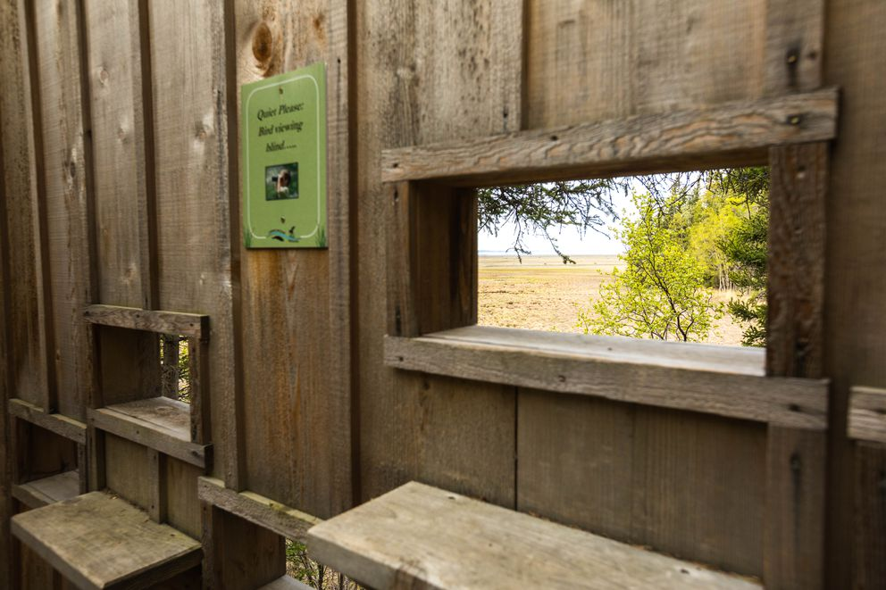 A bird viewing blind offers views of the Campbell Creek Estuary Natural Area. (Loren Holmes / ADN)