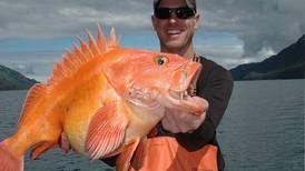 Despite ADN story, charter fishery no threat to rockfish
