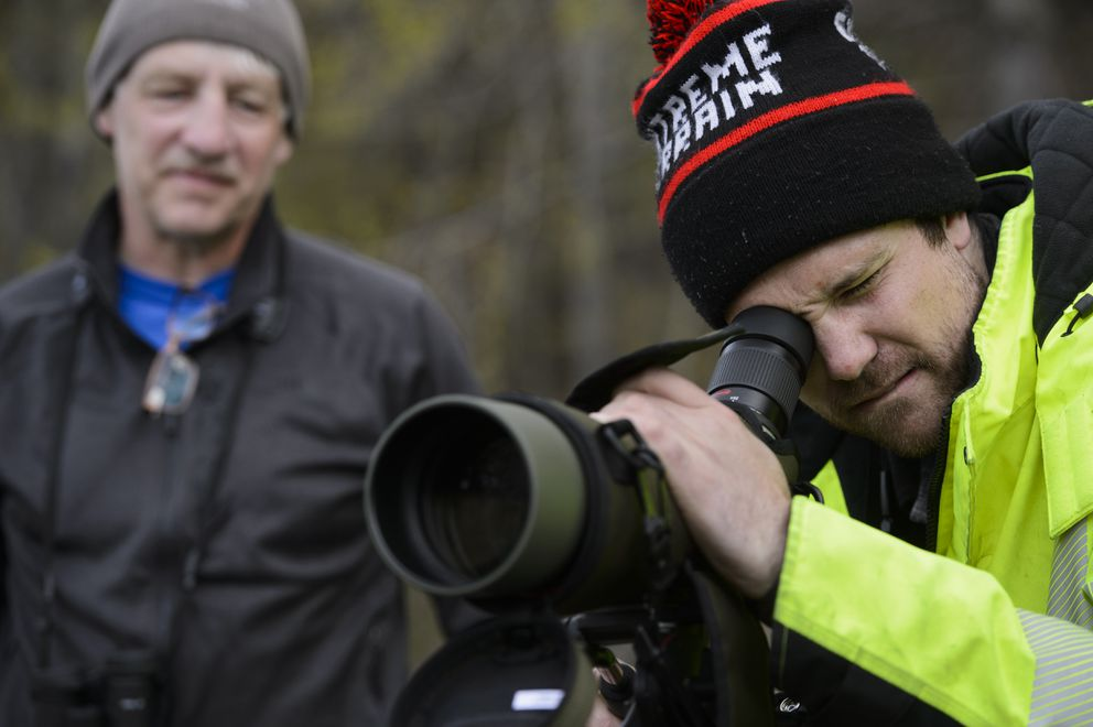 Nick Hajdukovich of Fairbanks looks through his scope to try to see the falcated duck on Potter Marsh. An opportunity to see a falcated duck is drawing birders to Potter Marsh on May 9, 2019. The Asian bird is rarely spotted in Alaska. (Marc Lester / ADN)