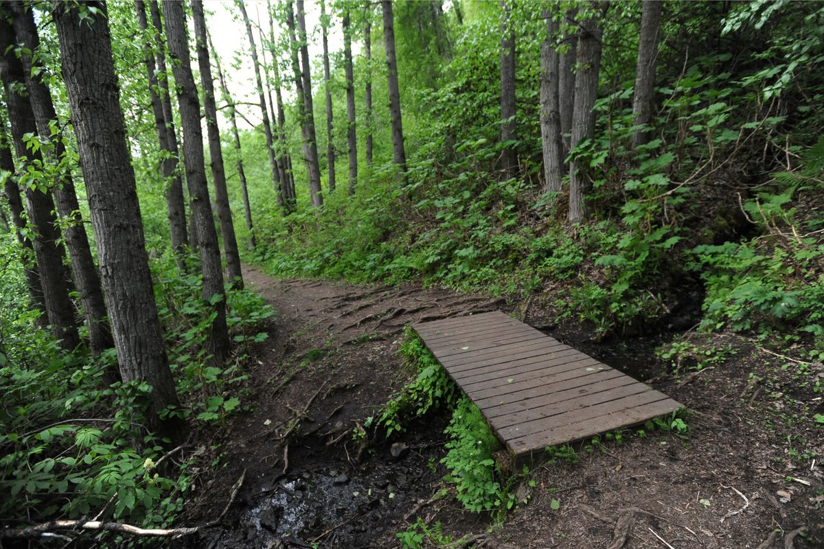 A boardwalk spans water running off the Chugach Mountains along Turnagain Arm Trail on Monday, May 16, 2016. (Bill Roth / ADN)