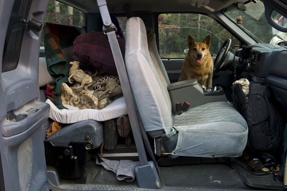 Gaelyn and Russel Stewart's dog, Ewe, sits in the front seat of a packed truck. Russel Stewart packed up many of his belongs from the Cooper Landing home he built himself because of the nearby fire danger. He has also cleared many trees from the property on August 27, 2019. (Marc Lester / ADN)