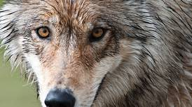 Predator control advocates should learn that myths are no match for facts