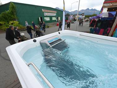 Curious Alaska: Amid all the quirky things for sale at the state fair, what's with hot tubs?