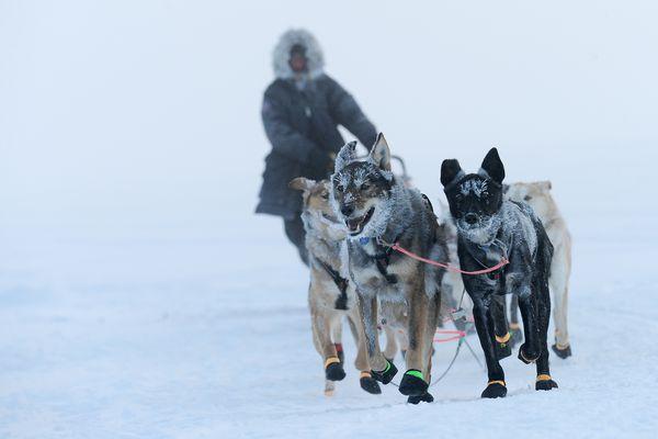 An Iditarod musher arrives at the Nulato checkpoint as the sun breaks through a fog bank on Sunday, March 12. (Bob Hallinen / ADN)