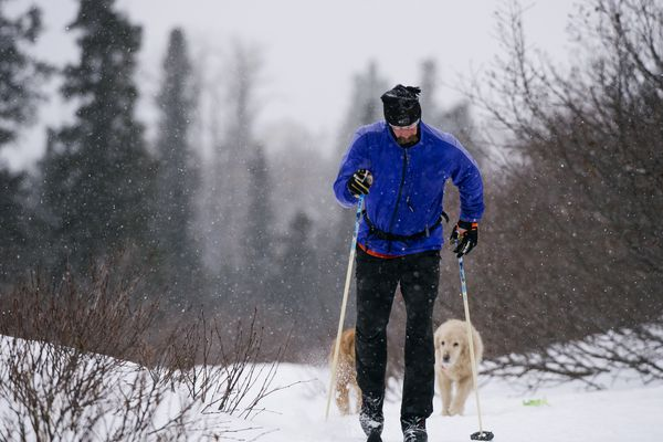 Macgill Adams skis on Gasline Trail near the Upper O'Malley Trailhead of Chugach State Park on Wednesday, February 20, 2019. His dogs, Mike and Colby Lynne Jones, follow close behind. Several inches of snow were expected to fall in Anchorage Wednesday night and Thursday, according to National Weather Service forecasts. (Marc Lester / ADN)